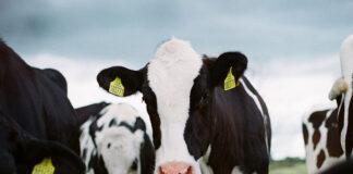 Jak wybrać dobre produkty mleczne